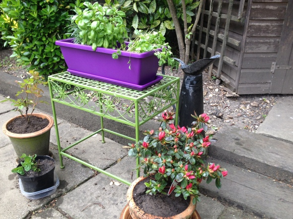 A Broad Gardening: Month 1